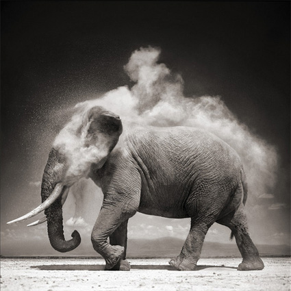 Elephant with Exploding Dust, Amboseli by Nick Brandt. Source: hastedkraeutler.com