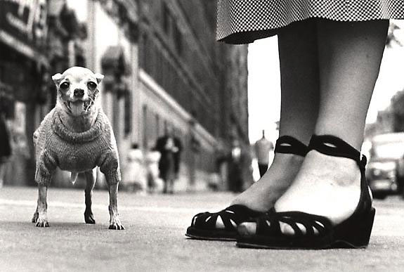 Photo by Elliot Erwitt . Source: houkgallery.com